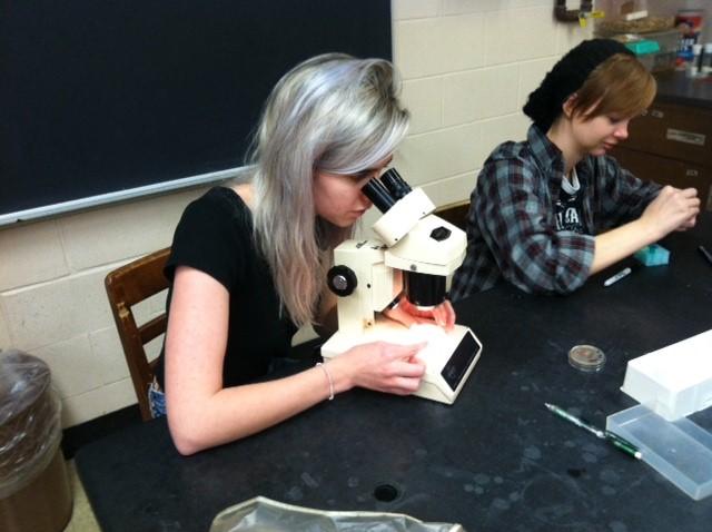 Worm Gene Lab