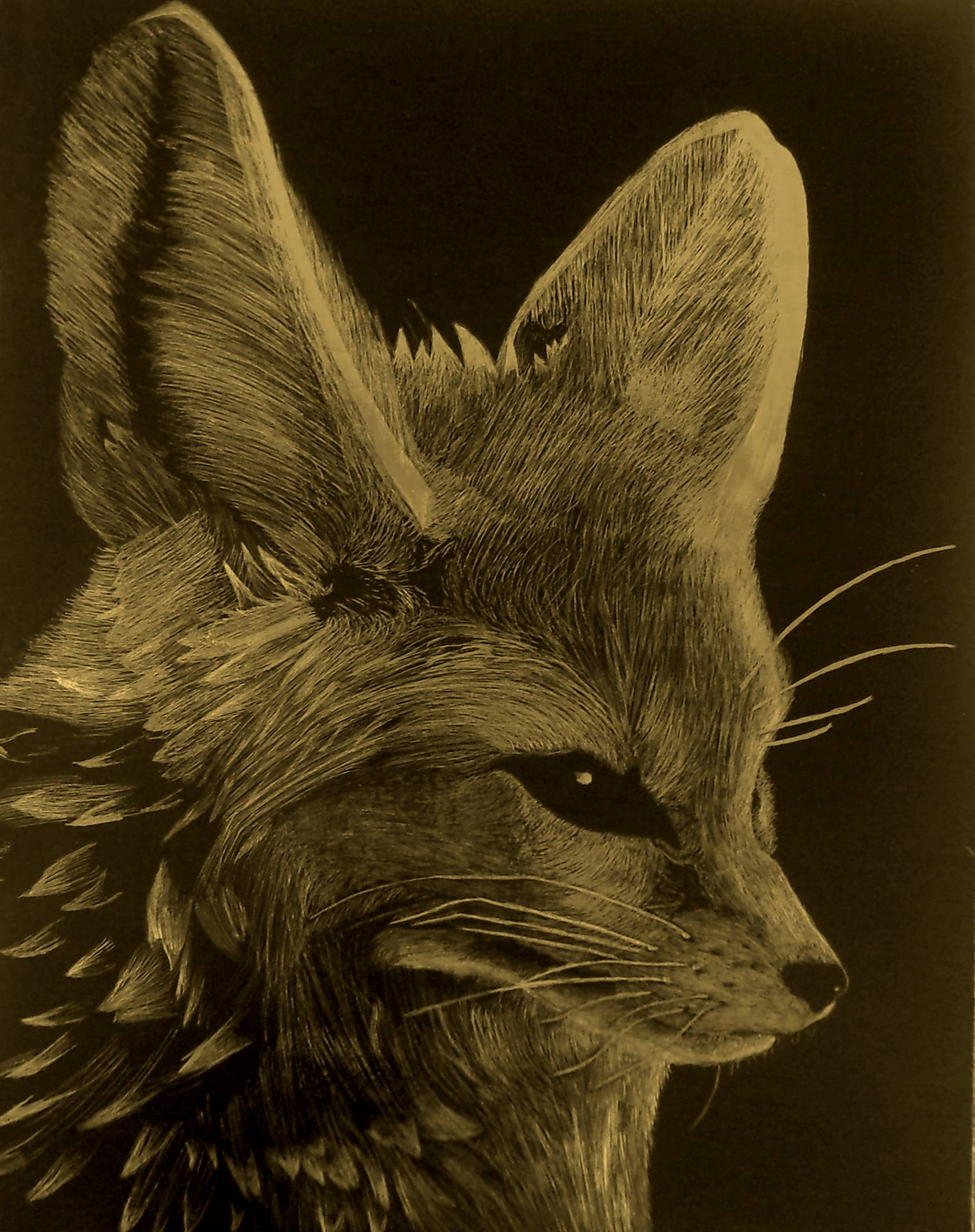 Scratchboard artwork of a fennec fox face